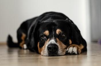 dog-691641_1920